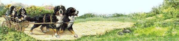 animiertes-berner-sennenhund-bild-0020