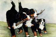animiertes-berner-sennenhund-bild-0099