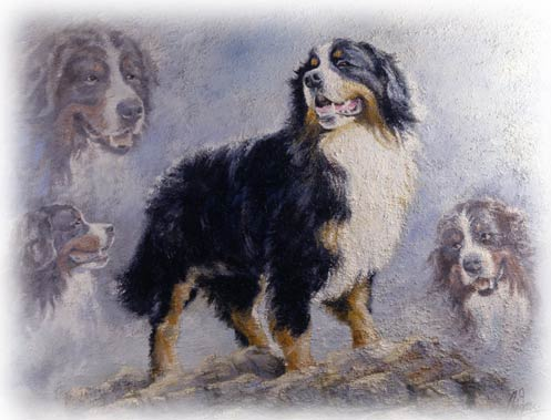 animiertes-berner-sennenhund-bild-0212