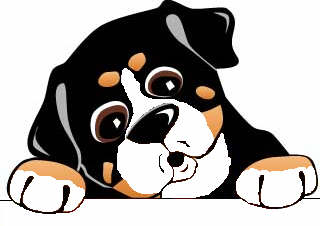 animiertes-berner-sennenhund-bild-0235