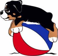 animiertes-berner-sennenhund-bild-0268